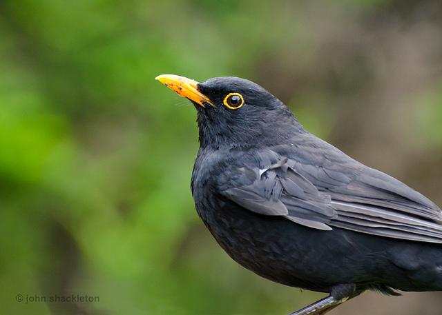 aves de asturias