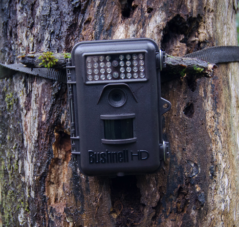 Trail Camera – Discovering Animal Pathways in Asturias