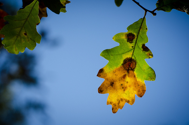Autumn continues….