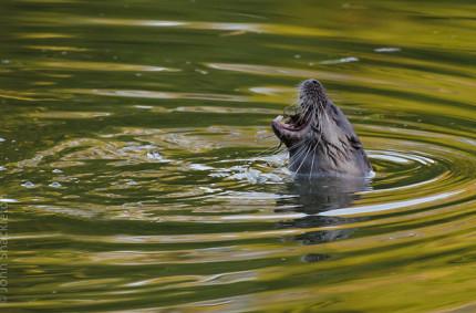 City Otters – Gijón, Asturias